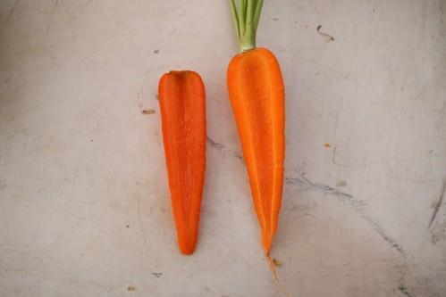"""Cà rốt Trung Quốc thường dài và bị ngắt cuống do bảo quản đông lạnh. Củ không có lông, không đuôi, màu đỏ tươi, đậm hơn so với cà rốt Đà Lạt và độ đồng đều cao"""""""