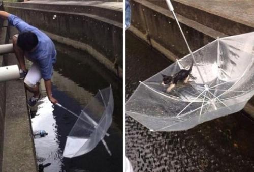 Chú mèo đáng thương may mắn được người đàn ông tốt bụng này cứu sống.