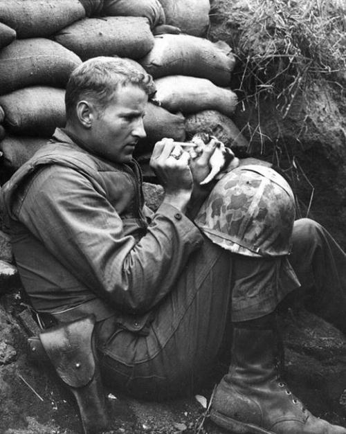 Một binh lính không kìm lòng được trước một chú mèo con tội nghiệp cần giúp đỡ.