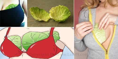 Đông y công nhận hiệu quả giảm đau từ lá bắp cải