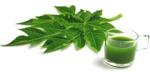 Uống nước lá đu đủ chữa bệnh ung thư không có bằng chứng khoa học