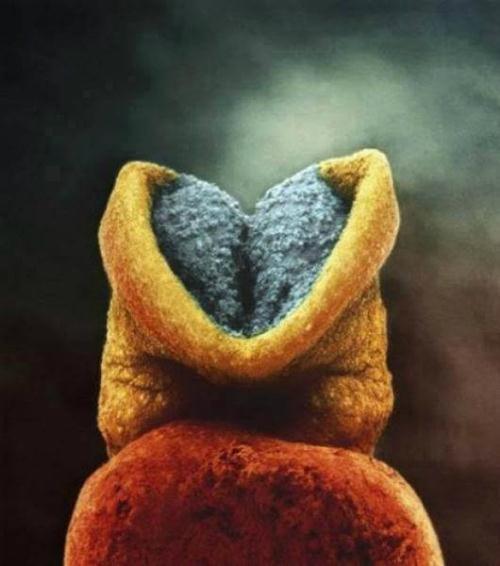 Bộ não bắt đầu phát triển trong phôi thai