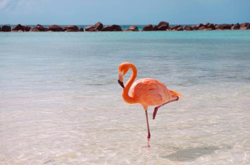 Động tác đứng một chân mô phỏng tư thế nghỉ ngơi của chim hồng hạc