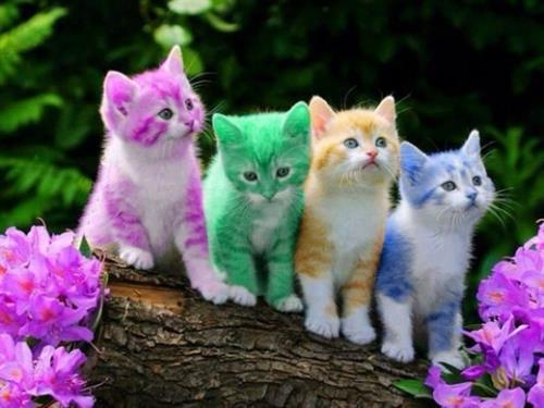 Khoa học đã chứng minh việc sở hữu một chú mèo sẽ khiến cuộc sống của chúng ta thú vị và hạnh phúc hơn