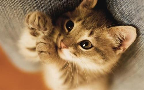 Những người nuôi mèo thường có trái tim khỏe mạnh hơn.